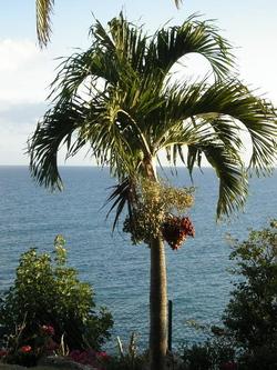 Palmtreegwada